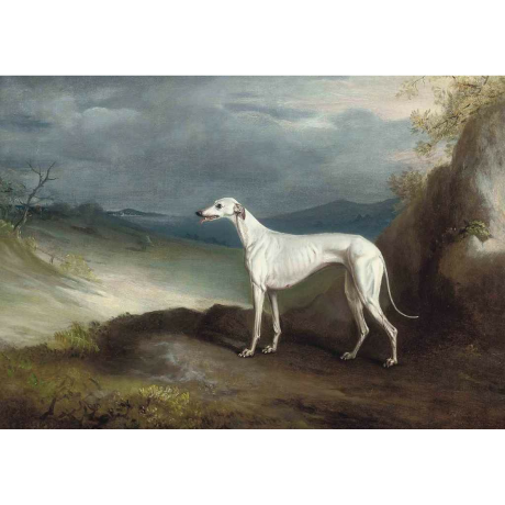 Pocztówka Sighthounds in Art No. 6